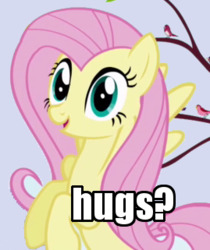 Size: 269x321 | Tagged: safe, edit, edited screencap, screencap, fluttershy, bird, pegasus, pony, friendship is magic, bronybait, cropped, female, hug, hug request, image macro, looking at you, mare, meme, reaction image, solo, songbird
