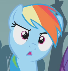 Size: 244x255 | Tagged: confused, cropped, female, mare, open mouth, pegasus, pony, rainbow dash, raised eyebrow, reaction image, safe, screencap, solo, stare, swarm of the century