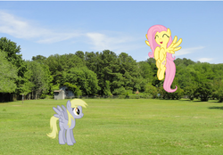 Size: 969x676   Tagged: safe, artist:lorettafox, derpy hooves, fluttershy, pony, irl, photo, ponies in real life, scrunchy face, vector