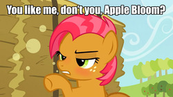 Size: 1280x718 | Tagged: safe, edit, edited screencap, screencap, apple bloom, babs seed, earth pony, pony, apple family reunion, appleseed, blushing, caption, cider, confrontation, drunk, female, filly, image macro, implied apple bloom, implied applecest, implied incest, implied shipping, lesbian, meme, shipping