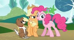 Size: 638x346 | Tagged: safe, screencap, applejack, gummy, pinkie pie, winona, alligator, dog, earth pony, pony, may the best pet win, female, mare, raised hoof, sideways glance