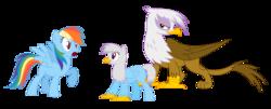 Size: 1600x645 | Tagged: safe, artist:cloudwatcherpony, gilda, rainbow dash, oc, classical hippogriff, griffon, hippogriff, female, gildash, interspecies offspring, lesbian, magical lesbian spawn, offspring, parent:gilda, parent:rainbow dash, parents:gildash, shipping