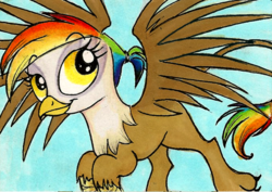 Size: 500x353 | Tagged: safe, artist:foxinshadow, oc, oc only, oc:rainbow feather, griffon, interspecies offspring, magical lesbian spawn, offspring, parent:gilda, parent:rainbow dash, parents:gildash, solo