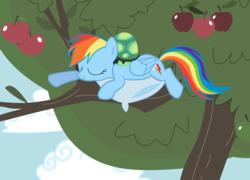 Size: 2738x1966 | Tagged: safe, artist:tgolyi, rainbow dash, tank, apple, apple tree, food, pillow, sleeping, svg, tree