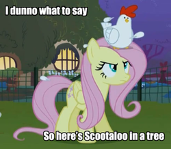 Size: 400x348   Tagged: safe, edit, edited screencap, screencap, fluttershy, scootaloo, bird, chicken, pegasus, pony, season 1, stare master, cropped, female, fluttershy is not amused, fluttertree, image macro, mare, meme, scootachicken, sitting on head, you better not lay an egg on me you chicken!