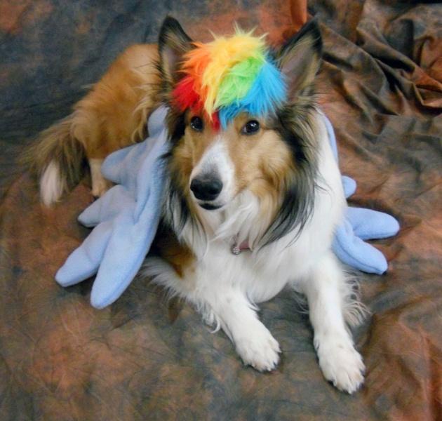 Rainbow Dash Costume for Pet  halloweencostumescouk