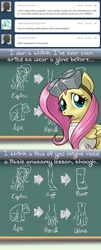Size: 640x1590   Tagged: safe, artist:giantmosquito, fluttershy, ape, gorilla, ask, ask-dr-adorable, chalkboard, diagram, dr adorable, tumblr