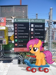 Size: 768x1024 | Tagged: artist:jackofmosttrades, irl, photo, ponies in real life, pony, sad, safe, scootaloo, scooter, vector, wet mane