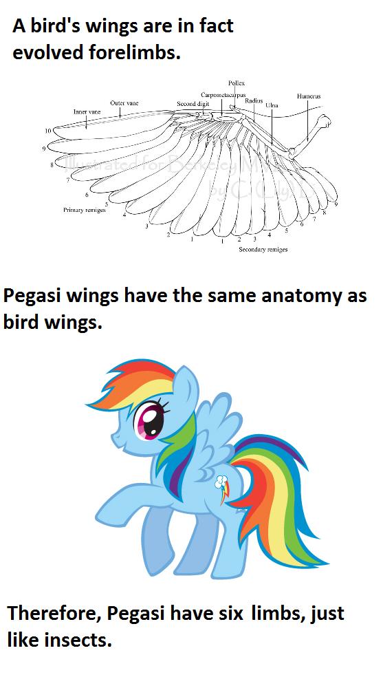 85901 - anatomy, bird, meta, mind blown, rainbow dash, safe, text ...