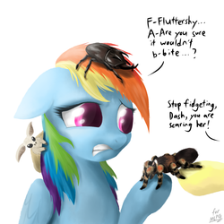 Size: 1600x1600 | Tagged: dead source, safe, artist:mlpanon, fluttershy, rainbow dash, beetle, insect, moth, pegasus, pony, rhinoceros beetle, spider, tarantula, arachnophobia, female, floppy ears, frown, gritted teeth, mare, raised eyebrow, raised hoof, red-kneed tarantula, scared, simple background, solo focus, white background