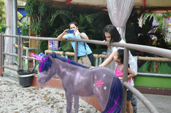 Size: 900x598 | Tagged: edit, horse, human, photo, ponies in real life, pony, real pony, safe, twilight sparkle