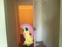 Size: 1600x1200 | Tagged: safe, artist:bjtmugen, fluttershy, pony, doorway, irl, photo, ponies in real life