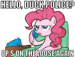 Size: 501x378 | Tagged: safe, pinkie pie, duck, image macro, op, op is a duck (reaction image), phone, reaction image, simple background, white background