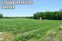 Size: 1024x685   Tagged: safe, pinkie pie, earth pony, pony, caption, edited photo, female, forever, image macro, impact font, irl, mare, photo, pinkie being pinkie, ponies in real life, solo, song reference, strawberry fields forever, text, the beatles
