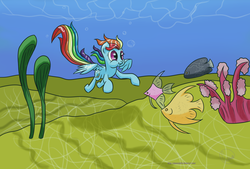 Size: 3200x2160 | Tagged: artist:chaosmalefic, fish, rainbow dash, safe, swimming, underwater