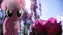 Size: 3840x2160 | Tagged: safe, artist:bastbrushie, artist:j-brony, cheerilee, earth pony, pony, female, flower, irl, lens flare, mare, outdoors, photo, ponies in real life, shadow, smiling, solo, vector