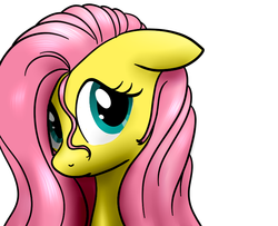 Size: 740x600 | Tagged: artist:hudoyjnik, bust, female, floppy ears, fluttershy, looking at you, mare, pony, portrait, safe, simple background, solo, stray strand, three quarter view, white background