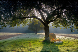 Size: 800x534 | Tagged: safe, artist:patryk567, applejack, 3d, apple tree, applejack's hat, blender, grass, hat, irl, lying, photo, ponies in real life, shadow, sleeping, solo, tree, under the tree