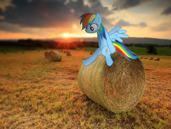 Size: 1600x1200 | Tagged: safe, artist:chaoticlightfixtures, artist:quanno3, rainbow dash, hay bale, irl, lens flare, photo, ponies in real life, shadow, sitting, solo, sunset, vector