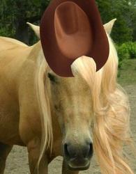 Size: 468x600 | Tagged: safe, applejack, horse, hat, irl horse, live action applejack