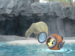 Size: 4608x3456 | Tagged: safe, artist:dasprid, artist:missbeigepony, fluttershy, polar bear, cave, diving helmet, diving suit, irl, photo, ponies in real life, singapore, vector, water, zoo