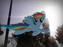 Size: 2560x1920 | Tagged: safe, artist:hunter2014hun, rainbow dash, pegasus, pony, flying, grin, irl, lens flare, photo, ponies in real life, sky, smiling, solo, sun, telephone pole, tree, vector