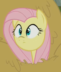 Size: 365x431   Tagged: safe, screencap, fluttershy, the hooffields and mccolts, cute, faic