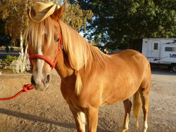 Size: 800x600 | Tagged: safe, applejack, horse, blaze (coat marking), coat markings, cosplay, facial markings, hoers, irl, irl horse, live action applejack, photo, ponies in real life, realistic, solo