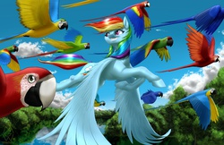 Size: 2550x1650 | Tagged: safe, artist:mykegreywolf, rainbow dash, blue-and-yellow macaw, hyacinth macaw, macaw, scarlet macaw, flying, forest, grin, looking back, realistic horse legs, smiling, solo, spread wings