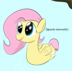 Size: 2088x2068 | Tagged: safe, artist:wenni, fluttershy, duck pony, :t, cute, descriptive noise, fake cutie mark, flutterduck, looking up, meme, pegaduck, pond, smiling, solo, x internally