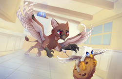 "Size: 2000x1294 | Tagged: safe, artist:viwrastupr, oc, oc only, oc:der, oc:kali, griffon, chase, cookie, cookie jar, food, kitchen, micro, size difference, that griffon sure ""der""s love cookies"