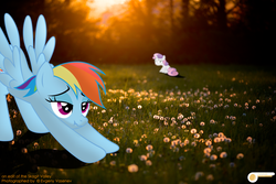 Size: 5196x3464 | Tagged: safe, artist:potato22, rainbow dash, sweetie belle, copyright, credits, forest, irl, iwtcird, meme, photo, ponies in real life