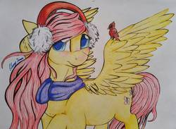 Size: 1246x911 | Tagged: safe, artist:gleamydreams, fluttershy, bird, cardinal, pegasus, pony, christmas, clothes, drawing, earmuffs, female, head turn, hearth's warming eve, holiday, looking at you, mare, prismacolors, raised hoof, scarf, solo, spread wings, traditional art, wings