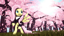 Size: 3840x2160 | Tagged: safe, artist:pointystarz, fluttershy, 3d, cherry blossoms, clothes, flower, flower blossom, grass, hoodie, katana, open mouth, scarf, source filmmaker, spread wings, sword, weapon
