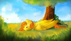 Size: 1600x920 | Tagged: safe, artist:isorrayi, oc, oc only, oc:firetale, pegasus, pony, content, eyes closed, male, nap, pleasant, prone, sleeping, solo, stallion, tree, under the tree