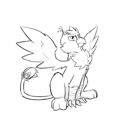 Size: 1280x1280 | Tagged: artist:captainhoers, behaving like a bird, birds doing bird things, cheek fluff, chest fluff, derp, grayscale, griffon, griffonized, leg fluff, monochrome, oc, oc:gyro feather, oc:gyro tech, oc only, puffy cheeks, safe, simple background, sketch, solo, species swap, spread wings, :t, white background, wing fluff, wings