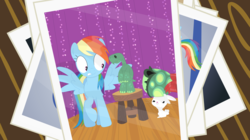 Size: 3571x2006 | Tagged: safe, artist:porygon2z, angel bunny, rainbow dash, tank, pony, accessory theft, alternate scene, angel is a bunny bastard, bipedal, covering, embarrassed, no shell, photo, shell