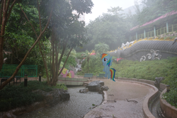 Size: 5472x3648 | Tagged: artist:eflyjason, china, fluttershy, hong kong, irl, photo, ponies in real life, pony, rain, rainbow dash, safe
