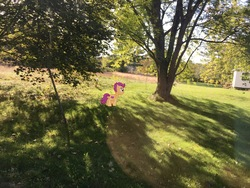 Size: 4032x3024   Tagged: safe, scootaloo, augmented reality, gameloft, irl, nature, photo, ponies in real life, solo