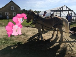 Size: 4032x3024   Tagged: safe, pinkie pie, augmented reality, gameloft, horse-pony interaction, irl, irl horse, photo, ponies in real life, smiling, solo