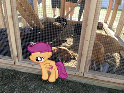 Size: 4032x3024   Tagged: safe, scootaloo, chicken, augmented reality, gameloft, irl, photo, ponies in real life, scootachicken, scootaloo is not a chicken, smiling, solo