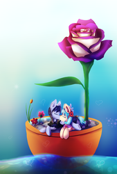 Size: 1866x2760 | Tagged: safe, artist:kaleidoscope20, coco pommel, inky rose, dreamscape, female, flower, flower pot, heart, inkypommel, kissing, lesbian, pot, rose, shipping