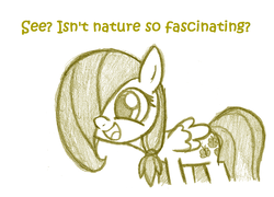 Size: 1078x778 | Tagged: artist:lilboulder-cloudsdalefillies, ask cloudsdale fillies, dialogue, excited, female, filly, filly fluttershy, fluttershy, hair over one eye, meme, nature is so fascinating, open mouth, pegasus, pony, safe, simple background, sketch, smiling, standing, white background, younger