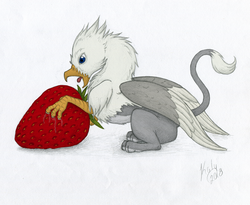 Size: 1502x1234 | Tagged: safe, artist:kalyandra, artist:tinibirb, color edit, edit, oc, oc only, oc:der, griffon, colored, food, male, micro, open mouth, simple background, solo, strawberry, tongue out, traditional art