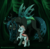 Size: 1260x1236 | Tagged: safe, artist:inuhoshi-to-darkpen, ocellus, queen chrysalis, changedling, changeling, changeling queen, compound eyes, duo, female, headcanon, looking at each other, mommy chrissy, mother and daughter, patreon, patreon logo, raised hoof, size difference