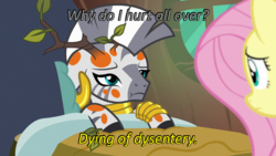 Size: 640x360 | Tagged: safe, edit, edited screencap, screencap, fluttershy, zecora, a health of information, caption, cards against humanity, duo, dying, image macro, implied diarrhea, implied dysentery, oregon trail, swamp fever, text, worried