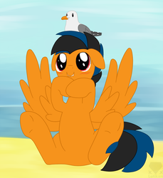 Size: 736x805 | Tagged: safe, artist:latiken, oc, oc only, oc:flicky flack, pegasus, pony, seagull, beach, male, sitting, solo, stallion