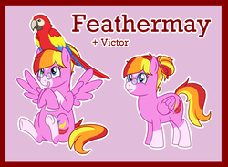 Size: 2154x1574   Tagged: safe, artist:bakufoon, feathermay, bird, macaw, parrot, pegasus, pony, scarlet macaw, female, glasses, mare, pince-nez, pink background, simple background, sitting, socks (coat marking), solo, star (coat marking)