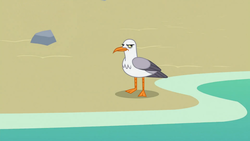 Size: 1920x1080 | Tagged: safe, screencap, seagull, surf and/or turf, animal, beach, frown, glare, grumpy, no pony, solo, water