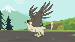Size: 993x559 | Tagged: safe, screencap, bird, falcon, may the best pet win, animal, peregrine falcon, solo, spread wings, wings